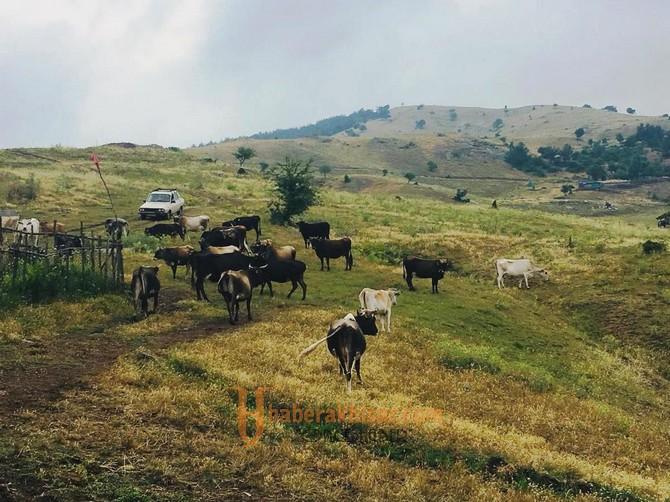 Yayladaki Hayvan Yetiştiricilerini Memnun Eden Ziyaret