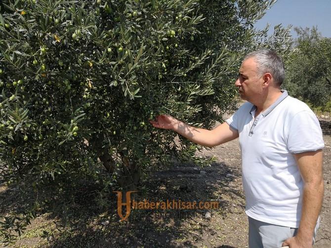 Bakırlıoğlu'ndan zeytin ve zeytinyağı primi için kanun teklifi