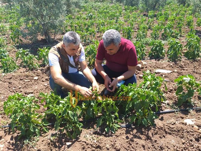 İlçe Tarım Müdürlüğü Tarlada, Çiftçinin Yanında