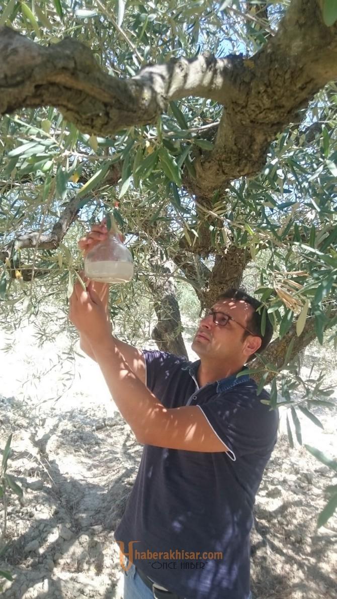Akhisar İlçe Tarımdan Zeytin Üreticilerine Önemli Uyarı!!!