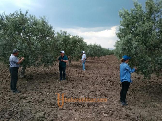 İlçe Tarımdan Halkalı Leke ve Dal Kanseri Uyarısı